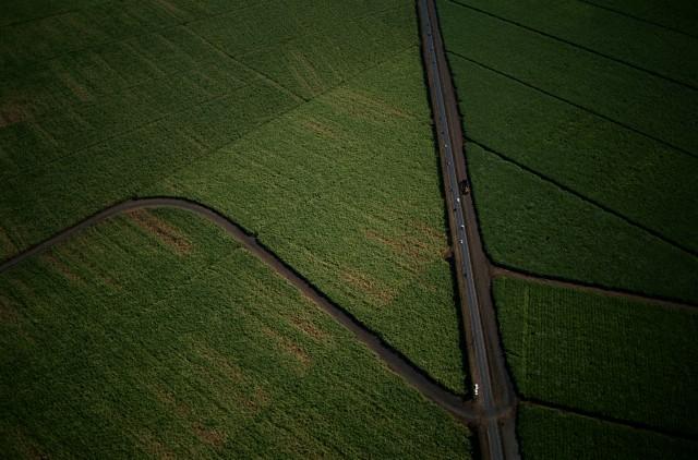 Agri Fields