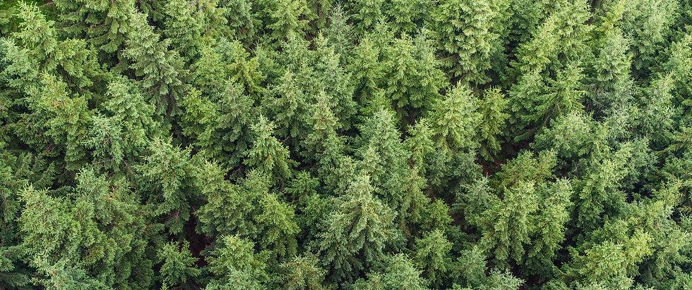 Trailhead counselling treelines.jpg