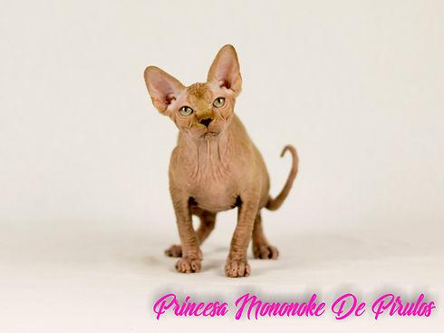Princesa Mononoke.jpg