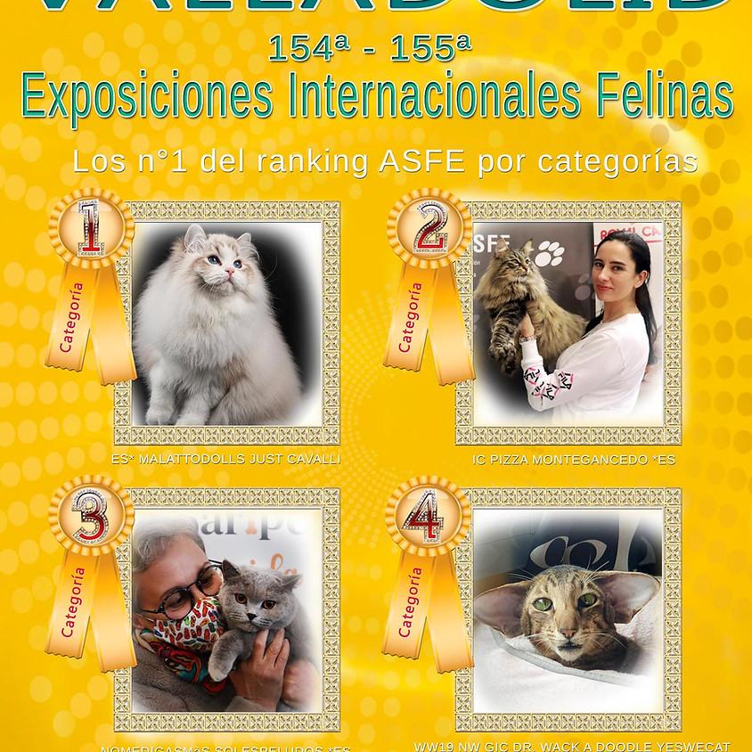 Exposición Internacional Felina
