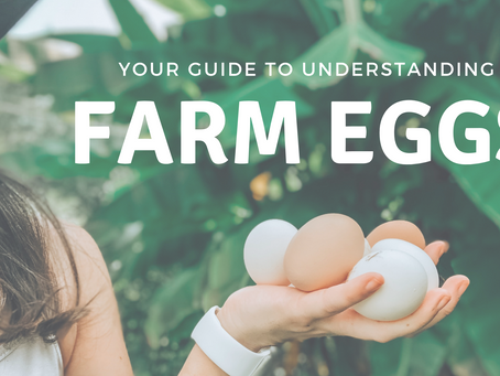 What You Should Know About Farm Eggs