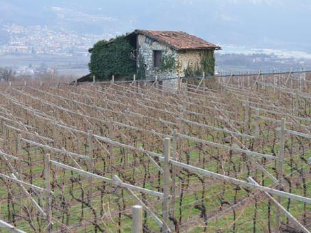 Il paesaggio viticolo della Vallagarina nella sua dimensione agroecologica