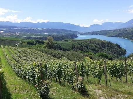 I Vini Franchi: una serata con i produttori