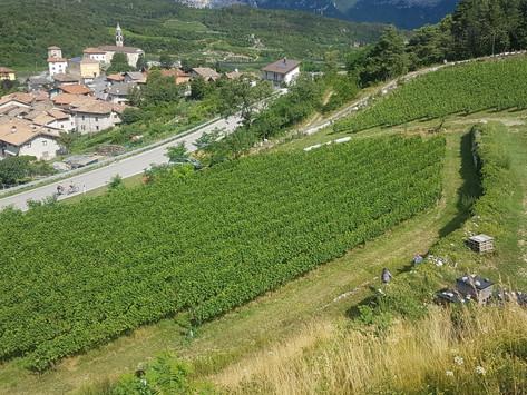 Alla scoperta dei vini PIWI in Valle dei Laghi