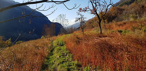 Terragnolo-Grano-Saraceno (3).jpg