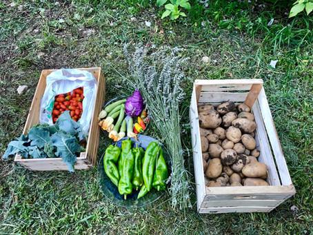 Il cibo nel cambiamento globale: uno sguardo antropologico