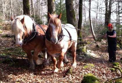 Chevaux1.png