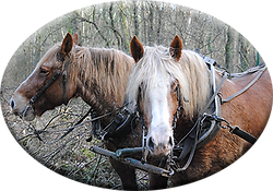 2chevaux.png