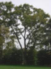 65A_hackberry_Ridgewood .jpg.png