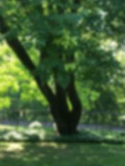 113BRaintree2_.JPG