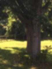 71B_Wolf Oak.JPG
