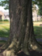 96B_Oak, Willow2.JPG