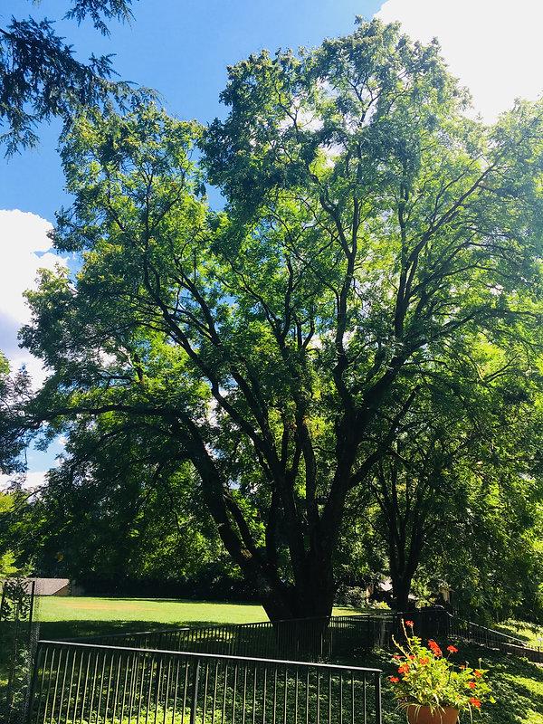 113A_Raintree2.jpg