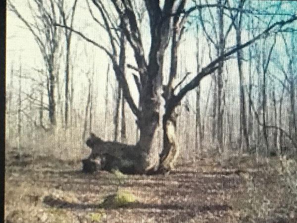 73B_SquirrelOak1.JPG