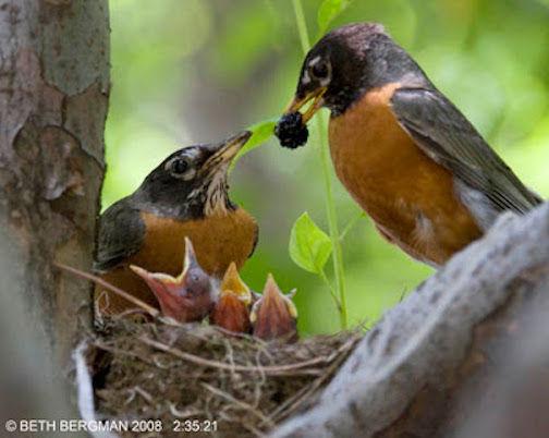 Robins&Mulberries.jpg