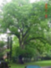 138A_Butternut 2.jpg.png