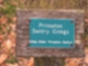 161C_Ginkgo-Sentry.JPG