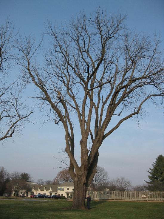 177A_Valleybrook estates black   walnut