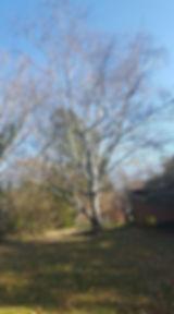142A_Birch_Spiese.jpg