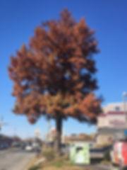 42C_Bald-Fruitville.JPG