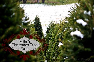 126E_XmasTrees_Miller's.jpg