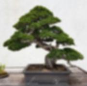 65037184-paisaje-bonsai-y-penjing-con-el