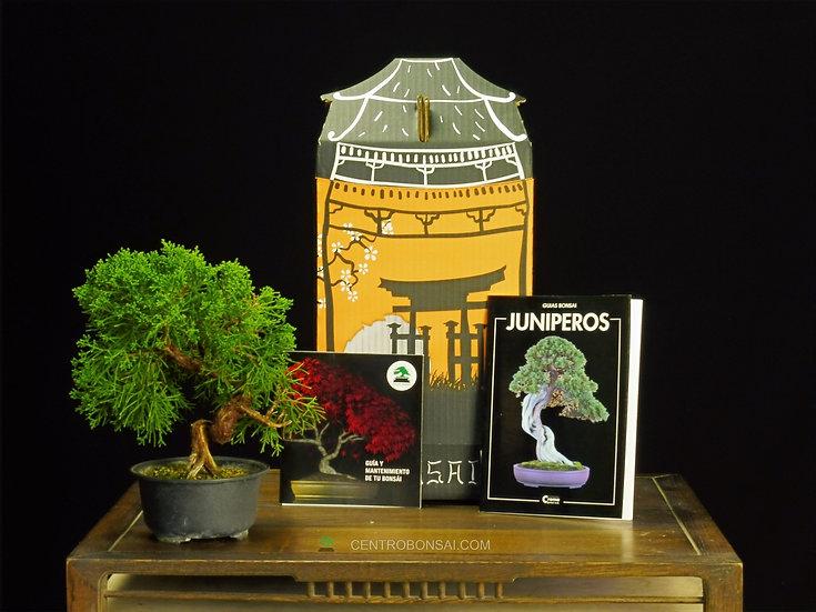 Pack Regalo Juniperus Itoigawa 16 años