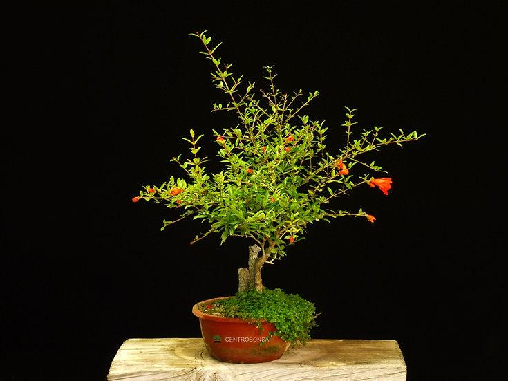 Granado Nejikan