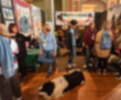 newfoundland dogs, puppies, breeders, dog lovers show