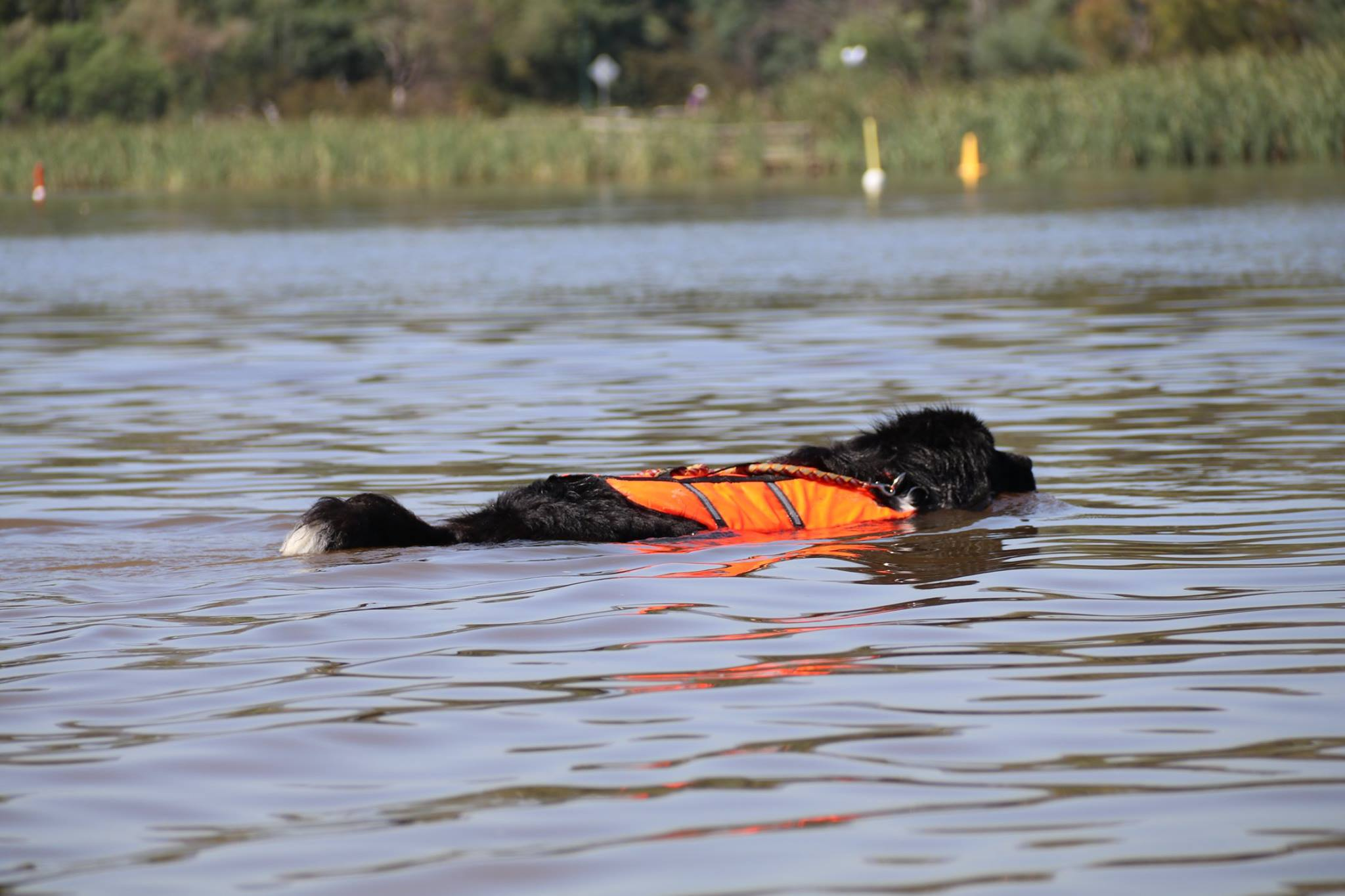 life saver, water, rescue, newfoundland