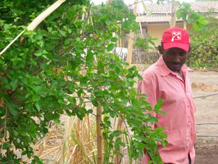 Oásis sustentável no Semiárido