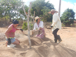 Mulheres do semiárido dão vida a seus quintais