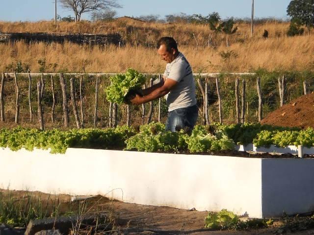 Rosevelton já produz hortaliças