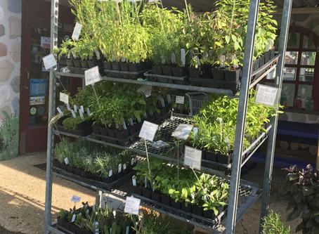 Fresh Local Produce & Plants