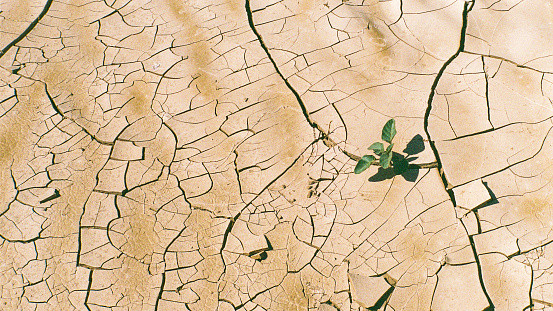 Plant growing from dry cracked desert