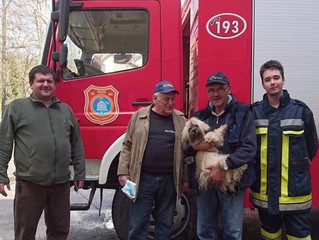 Tragedy Strikes Croatia: Havanese Therapy Dogs offer Emotional Assistance