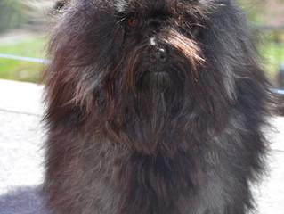 Researching Canine Behavioural Genetics