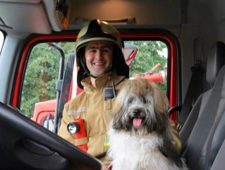 Croatian Havanese Therapy Dogs from the Schoolroom to the Firehall