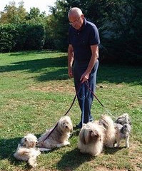 Training Havanese puppies as Therapy Dogs at the Boltha Academy in Croatia