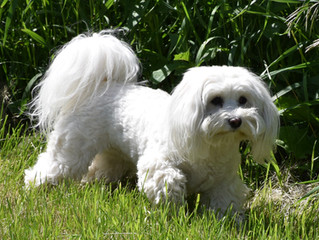 Canadian Kennel Club Proposed Accredited Breeders Program