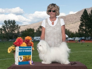 Welcome to buyhavanese.com a site designed to protect the Havanese breed!           My sincere hope