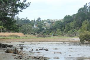 Kauri Point Domain