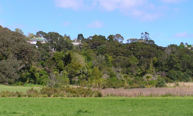 Little Shoal Bay wetland.png