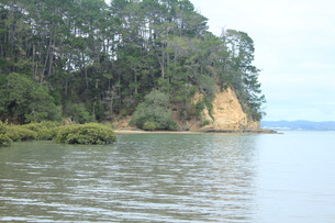 Kauri Point Domain coastline