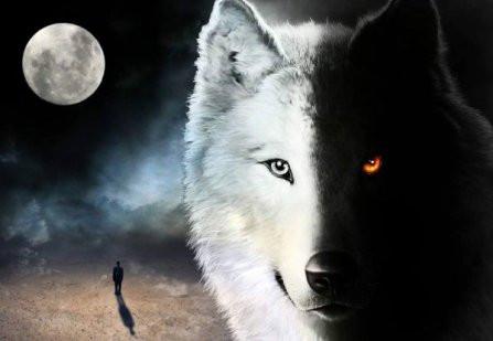 Les deux loups