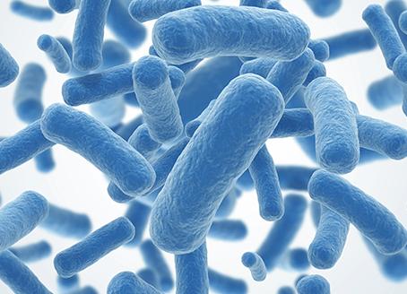 Flora intestinal y probióticos, importantes para la salud