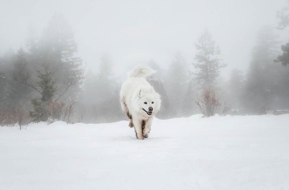 Polar-01-by-Dante-Heks(WEB).jpg