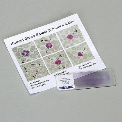 Discovering Human Blood Self-Study Unit, Microscope Slide Set