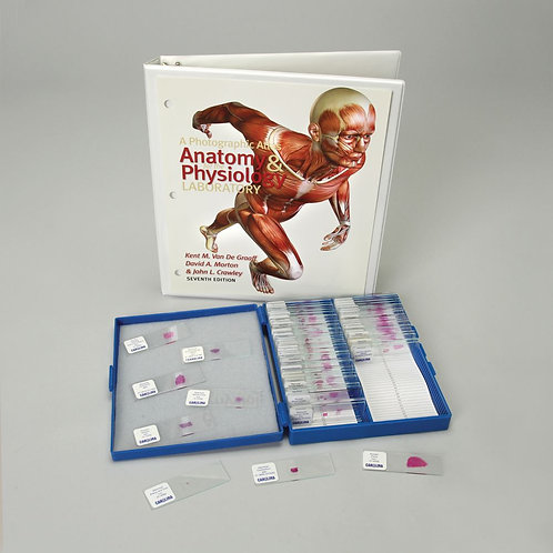 Basic Anatomy and Atlas Slide Set