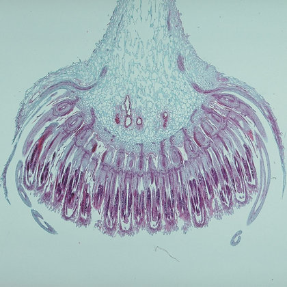 Flowers, Fruits, and Seeds Microscope Slide Set